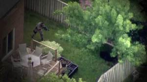 Footage captures moment police shoot Newmarket bear stuck in tree