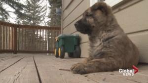 Rocky Mountain Animal Rescue facing funding shortfall