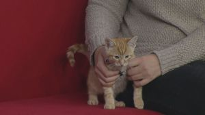 Adopt a Pet: cat and kitten adoption drive