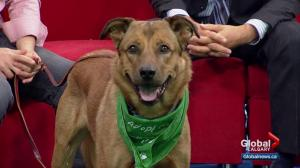 Pet of the Week: Buster