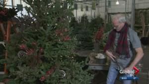 Gardenworks: Christmas Trees