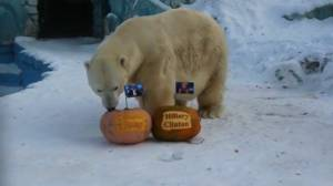 Siberian zoo tiger and polar bear 'vote' in U.S. election
