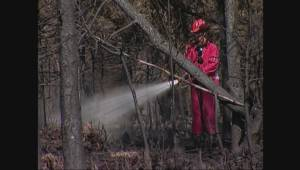 Archive: 2005 Burns Bog fire