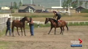 Calgary Stampede introduces Stampede Relay