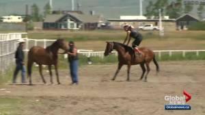 Calgary Stampede introduces Stampede Relay