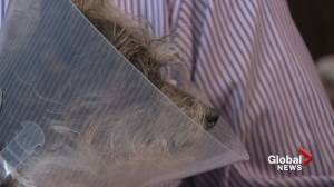 Dog violently attacked in northwest Calgary leaves pet owners with massive vet bill