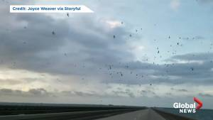 Thousands of birds fly over Lake Pontchartrain ahead of Tropical Storm Barry