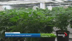 Cannabis IQ: Investing in pot