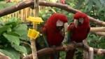 Bloedel Conservatory's 'parrot whisperer'