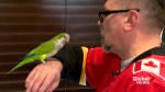 'Go Flames Go!': Calgary man teaches parrot to cheer on his hockey heroes