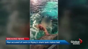 Ripley's Aquarium naked swimmer granted bail