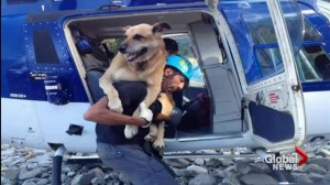 Helicopter rescue team volunteers to save dog in distress