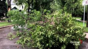 'Get to safety': Saskatoon assessing tree-toppling storm