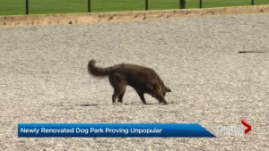Newly renovated Leslieville dog park proving unpopular
