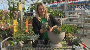Gardening Tips: succulent containers