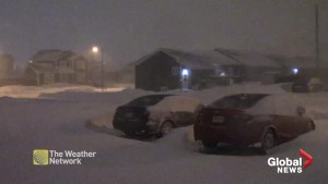 Parts of Newfoundland slammed with snow as residents welcome 2019 with a blizzard