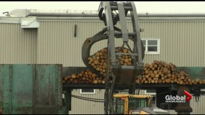 New Brunswick may be in a better position now to absorb softwood lumber duty hit: Export Development Canada