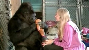 Koko, the gorilla who mastered sign language, dies at 46