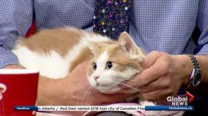 Edmonton Humane Society: Rigby & Mochi