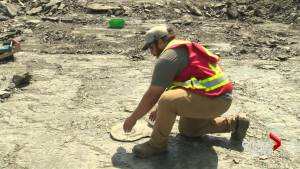 Prehistoric fossil stolen from southern Alberta mine