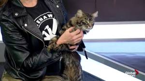Second Chance Animal Rescue Society: cat and dog up for adoption
