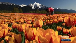 Explore BC: Fraser Valley