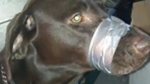 Woman facing charges after duct-taping dog's mouth shut, posting photo online