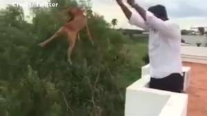 Dog survives being  thrown off a building