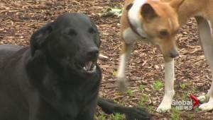 Beaconsfield leash laws