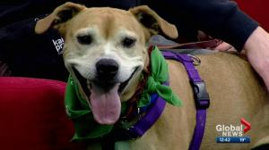 Pet of the Week: Maple