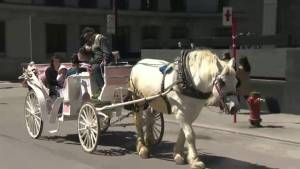 Protesters want Montreal to ban horse-drawn carriages