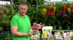Getting spring bulbs ready to plant