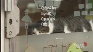 More customers allege discrimination at Toronto cat cafe