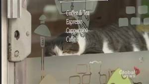More customers allege discrimination at Toronto cat cafe (02:15)