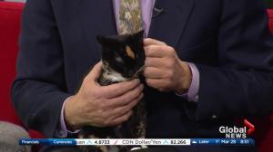 Edmonton Humane Society: Oswald & Amber
