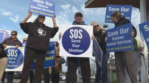 Residents, advocates rally at city hall to keep Oshawa Animal Services open