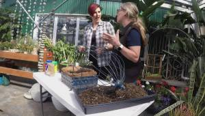 Get Gardening: Succulent Plants
