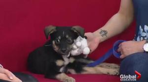 Adopt a Pet: playful puppy Socks looking for a new home