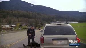 Bob Layton: Legal loophole in drug dog case