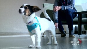 Mental health support at University of Saskatchewan's veterinary college