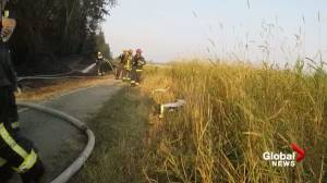 Surrey firefighters clean up after grass fire singes brush near Langley border