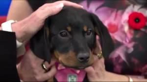 Adopt a Pet (03:03)