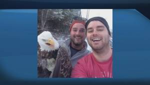 Ontario brothers snap selfie with bald eagle they help free from trap