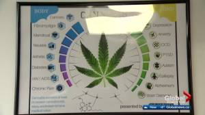Edmonton police crack down on illegal marijuana dispensaries