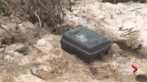 Traps set for rats in NDG