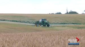 Discovery of genetically modified wheat in Alberta prompts Japan to halt imports