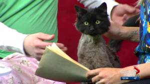 Calgary Humane Society Pet of the Week: Gavin