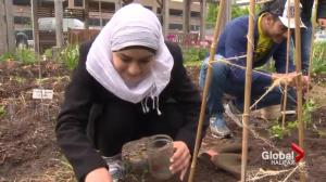 New Canadians dig into English in an outdoor classroom