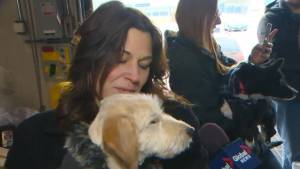 11 rescued dogs from Asian meat trade landed at Pearson Saturday