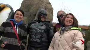 Calgary superhero aims to spread random acts of 'batness'